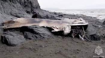Спасатели обследовали побережье в районе крушения Ан-26 на Камчатке