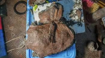 В Египте археологи обнаружили корзины с фруктами IV века до нашей эры