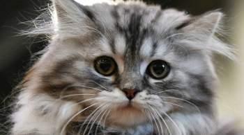 В Госдуму внесли законопроект о запрете продажи животных в зоомагазинах