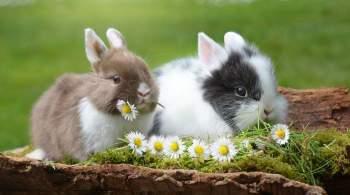 Что нужно знать, прежде чем приобрести декоративного кролика