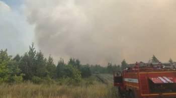 В Тольятти завели уголовное дело после природного пожара
